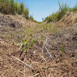Dry stream bed Uige Angola